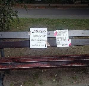 Truje psy w Warszawie i wyjaśnia, dlaczego.