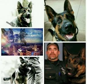 Pies oddał życie za swojego Pana!