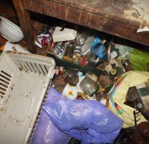 TOZ odebrał prawie 40 kotów z jednego mieszkania. Właścicielka groziła samobójstwem, a jej syn obwąchiwał inspektorów!