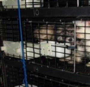 Zapakował 67 szczeniaków do samochodu i zostawił. Gdyby nie oni, czekałaby je pewna śmierć!