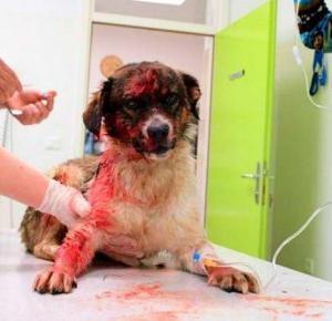 Postrzelił psa prosto w pysk za… 20 zł!