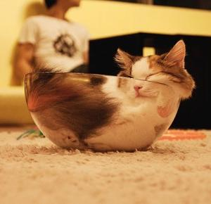 Koty ukryte w dziwnych miejscach!