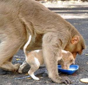 Małpka adoptowała psa!