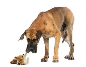Pies zastrzelił swego właściciela!
