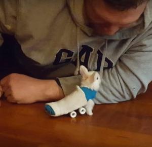 Niepełnosprawny królik na deskorolce!