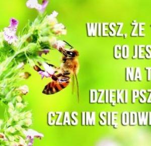 Adoptuj pszczołę!