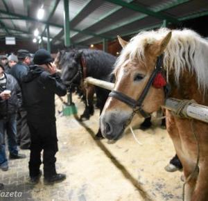 Wstępy w Skaryszewie - horror dla koni!