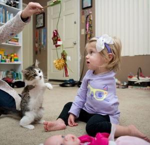 Kotek trójłapek adoptowany przez dziewczynkę bez rączki!