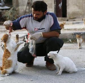 Mieszkaniec ogarniętego wojną aleppo dokarmia 150 bezpańskich kotów!