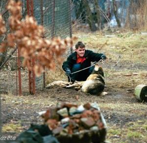 Od 1 stycznia na Węgrzech obowiązuje zakaz trzymania psów na łańcuchu!