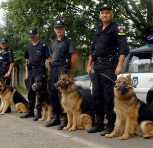 Ponad 100 psów będzie pomagać policjantom w czasie ŚDM!