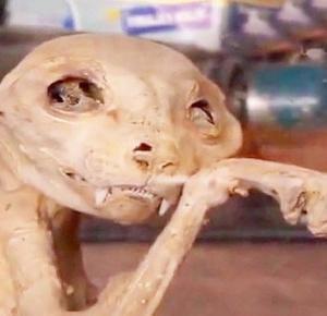 Odkryto szkielet nieznanego zwierzęcia!