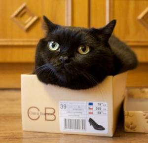 Dlaczego koty lubią siedzieć w pudełkach?