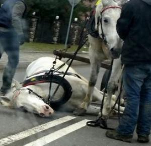 Upadek konia na Olczy!