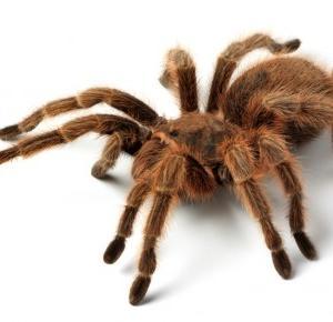 Przez pająka wezwano policję!