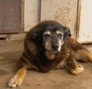 Nie żyje najstarszy pies świata. Miał 30 lat!