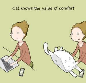 10 powodów dla których warto posiadać kota!