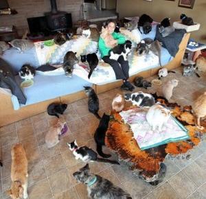Pewna kobieta mieszka ze 1100 kotami!