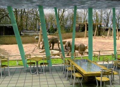 Obiad z widokiem na słonie w płockim zoo!