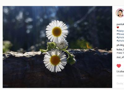 Piękno natury uchwycone w obiektywie.