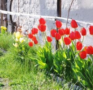 Paulina Bagińska: Kocham wiosnę!