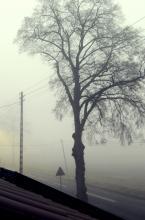 Bakusiowe Bzdetki: Jak przez mgłę