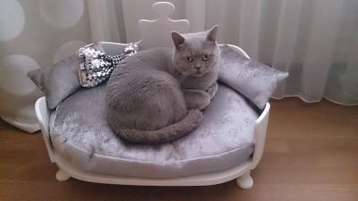 Kto powiedział że kanapy nie mogą być dla kotów.  Blog o szyciu!