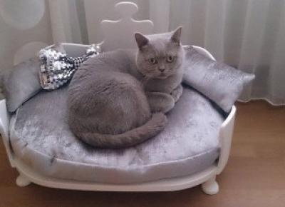 Kanapy dla psów i kotów.