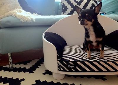Kanapa dla psa z mojej autorskiej kolekcji.