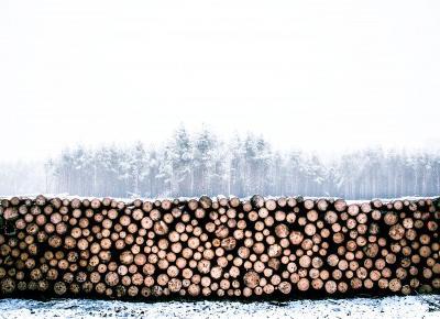 Protest przeciwko wycince drzew [POMOC]