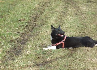 Historia adopcji mojego psa:)