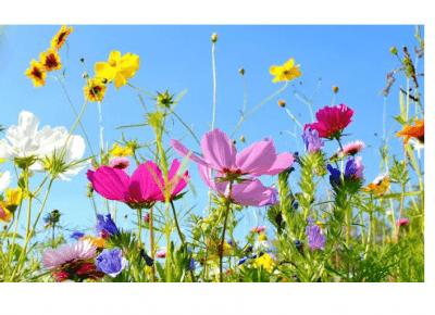 pomysł na nudę -suszenie kwiatów