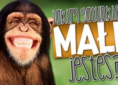 Jakim gatunkiem małp jesteś?