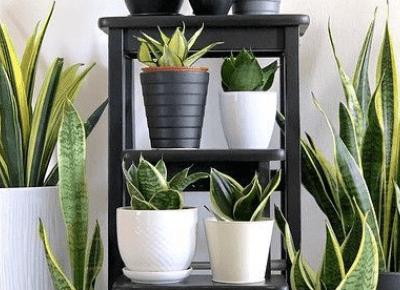 5 powodów dla których warto mieć rośliny doniczkowe w domu!
