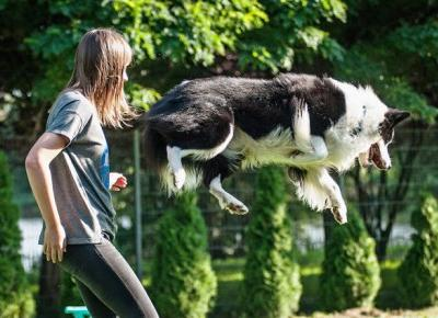Plato - Border Collie: Warsztaty dogfrisbee z Paulą Gumińską - 24.08.17