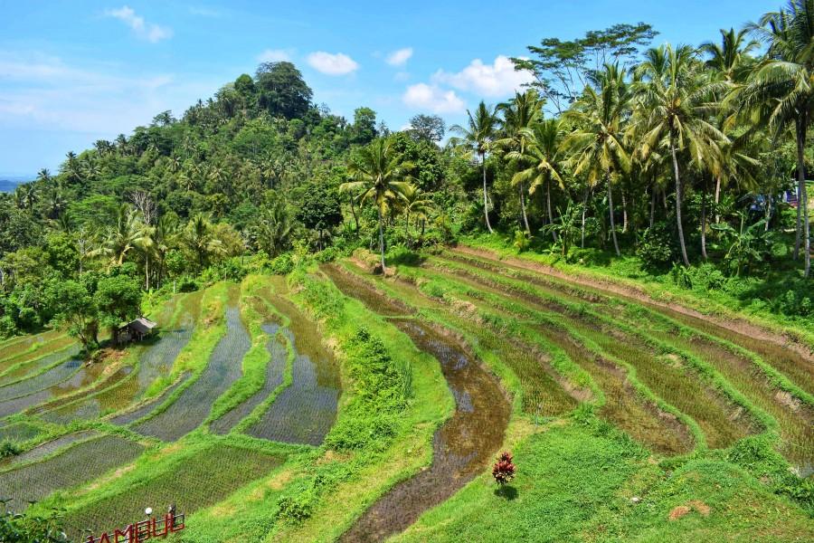 Dlaczego warto pojechać na Bali?