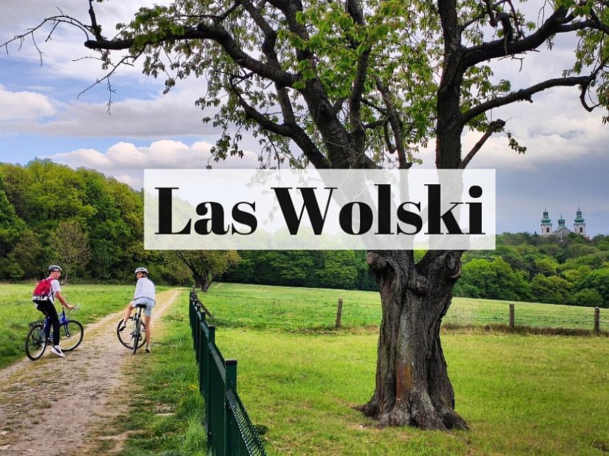 Las Wolski w Krakowie: prawie jak nie Kraków. Prawie jak nie las