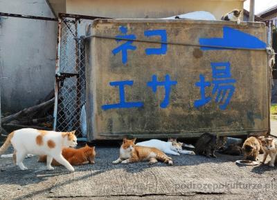 Wyspa kotów w Japonii. Nazywają ją kocim rajem, ale ja chciałam z niej uciekać