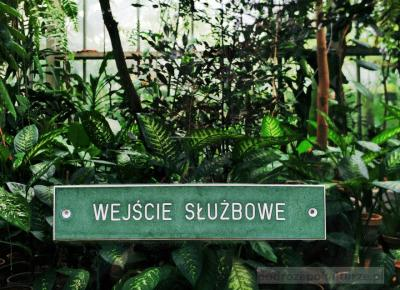 Poznań darmowe muzea: dni bezpłatnego zwiedzania muzeów Poznania