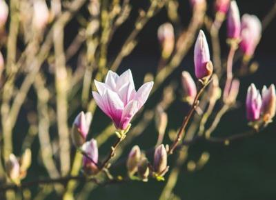 Kocham Wiosnę!