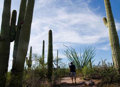 Bolek i Lolek na Dzikim Zachodzie - parki narodowe w Arizonie