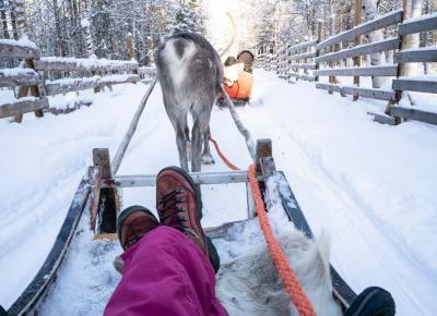 Prawdziwa zima w Laponii: psi zaprzęg i spotkanie z reniferami