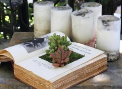Rośliny W Książce DIY - Krok Po Kroku | Pomysł Na Wszystko