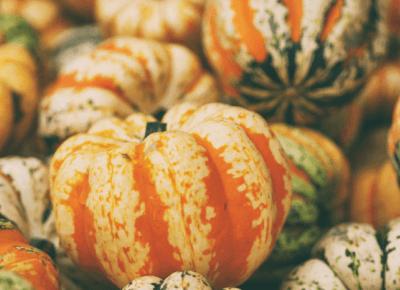 KAKTUSOWY SAD: Znicze, dynie, listopad