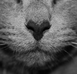 Czego nauczył mnie kot. Przypadkowo napotkany kot. - będękimś.pl