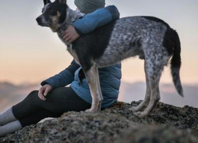 nowoczesne gadżety dla psa - czyli co się przyda do podróży?