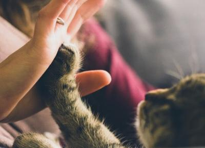 Jesteś kotomaniakiem? Czyli co Ty i Twój kot w domu mieć powinniście.