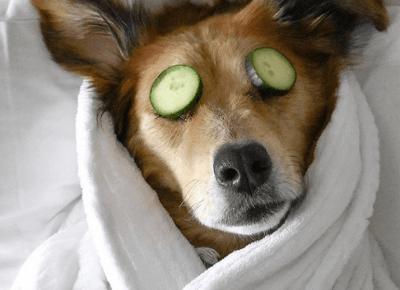 Dzień Psa, Dzień Budyniu? - KALENDARZ ŚWIĄT NIETYPOWYCH