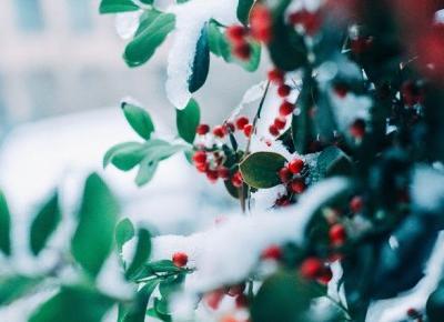 Bling Bling MakeUp: Blogmas 2018, #15 Świąteczny dom
