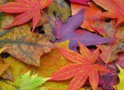Bling Bling MakeUp: Makijaż w kolorach jesieni — Bordo